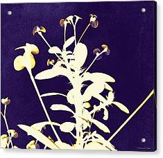 Crown Of Thorns - Indigo Acrylic Print by Shawna Rowe