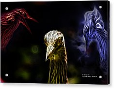 Crowned Heron - 5466 Fa Acrylic Print by James Ahn