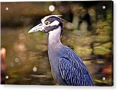 Crowned One Acrylic Print by Marty Koch