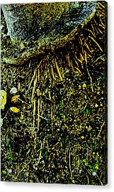 Crowned Roots With A Perspective Acrylic Print by Sandra Pena de Ortiz