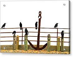 Crows At Anchor Acrylic Print