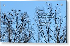 Crows Acrylic Print by Catherine Favole-Gruber