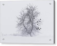 Crows On Tree In Winter Snow Storm Acrylic Print by Peter v Quenter