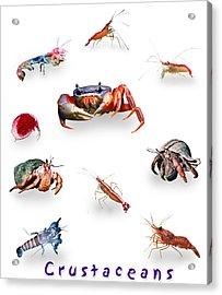 Crustaceans Acrylic Print by Wernher Krutein