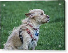 Acrylic Print featuring the photograph Cruz Enjoying A Warm Gentle Breeze by Thomas Woolworth