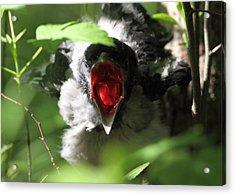 Crying Crow Acrylic Print by Alex Sukonkin