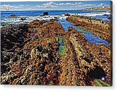 Crystal Cove Tide Pools  Acrylic Print by Donna Pagakis