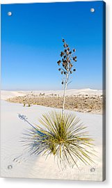 Crystal Dune Tree At White Sands National Monument In New Mexico. Acrylic Print