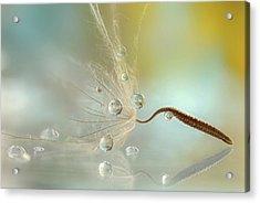 Crystal Acrylic Print by Rina Barbieri