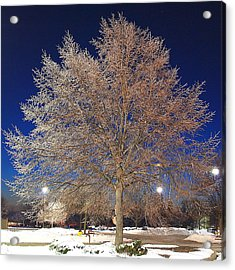 Crystal Tree Acrylic Print by Frozen in Time Fine Art Photography