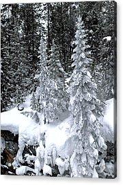 Crystal Trees Of Yellowstone Acrylic Print