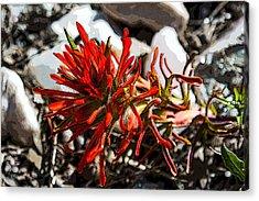 Crystalborn Acrylic Print by Rhys Arithson