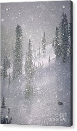 Crystalized Snowflakes Falling While Being Backlit By The Sun Acrylic Print