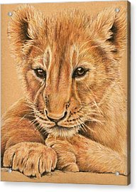 Acrylic Print featuring the drawing cub by Heidi Kriel