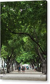 Cuba, Havana, Havana Vieja, Paseo De Acrylic Print