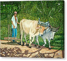 Cuban Countryman Acrylic Print by Manuel Lopez