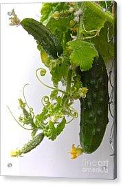 Cucumber Dance Acrylic Print