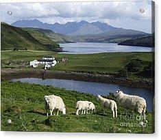 Cuillin Mountains - Isle Of Skye Acrylic Print