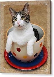 Cup O Tilly 1 Acrylic Print