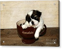 Cup Of Puppy Acrylic Print