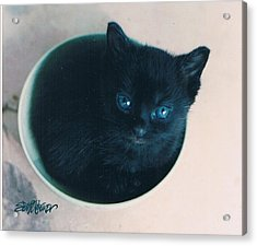 Cup O'kitty Acrylic Print by Seth Weaver