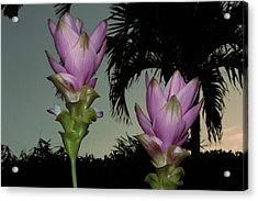 Acrylic Print featuring the photograph Curcuma Hybrid Flowers by Greg Allore