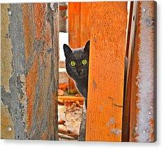 Cat Curiosity Acrylic Print