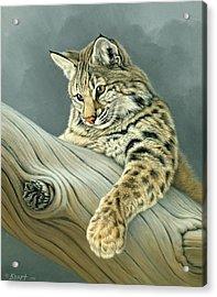 Curiosity - Young Bobcat Acrylic Print