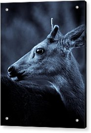 Acrylic Print featuring the photograph Curious  by Adria Trail