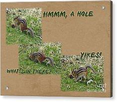 Curious Chipmunk Gets A Surprise Acrylic Print