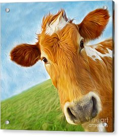 Curious Cow Acrylic Print by Jo Collins