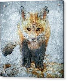Curious Fox Acrylic Print by Steve Barge