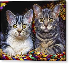 Curious Kitties Acrylic Print by David Wagner