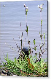 Acrylic Print featuring the photograph Curious Otter by I'ina Van Lawick