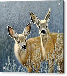 Curious Pair Acrylic Print by Paul Krapf