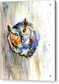 Curious Screech Owl Acrylic Print by Christy Lemp