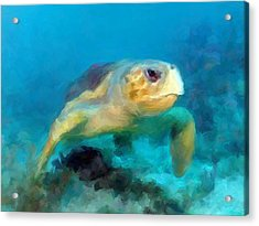 Curious Sea Turtle Acrylic Print
