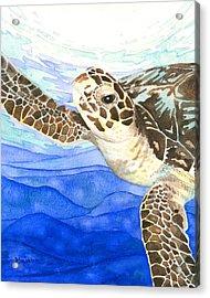 Curious Sea Turtle Acrylic Print