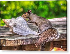 Acrylic Print featuring the photograph Curious Squirrel by Rob Sellers