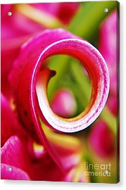 Curl With A Pearl Acrylic Print by Judy Via-Wolff