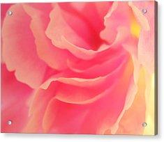 Curling Blossom Acrylic Print