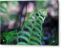 Acrylic Print featuring the photograph Curls by Debbie Oppermann