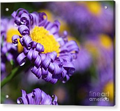 Curly Haired Beauty Acrylic Print