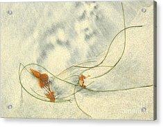 Curly Seaweed Acrylic Print