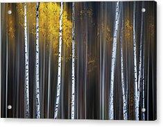 Curtain Of Fall Acrylic Print