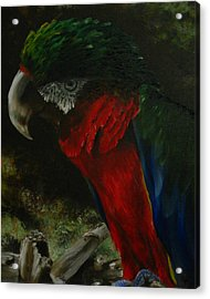 Curtis The Parrot Acrylic Print by Sherry Robinson