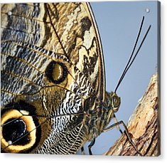 Curve Of A Butterfly Acrylic Print