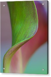 Acrylic Print featuring the photograph Curves Of A Calla Lily by Zoe Ferrie