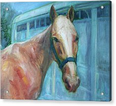 Custom Pet Portrait Painting - Original Artwork -  Horse - Dog - Cat - Bird Acrylic Print