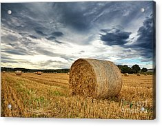 Cut Field Acrylic Print by Jane Rix